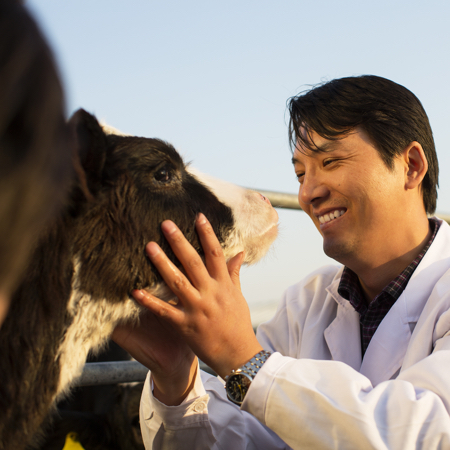 Vet with dairy cow in China