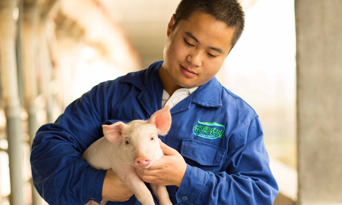 Swine producer holding piglet in China