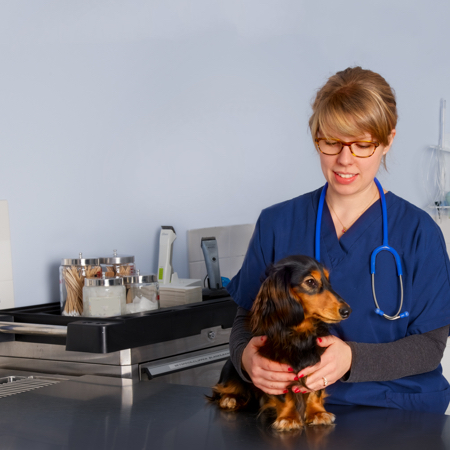 Vet with dachshund in US
